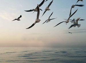 Måger ved Odense Havn